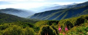 art-of-writing-scenery